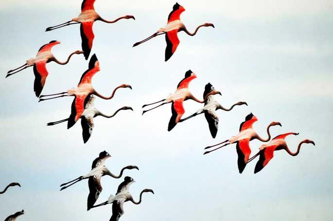 Flamingolar Bodrum'da