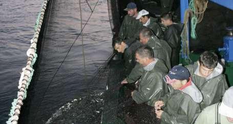 Yasak bitti, tezgahlar balıkla doldu