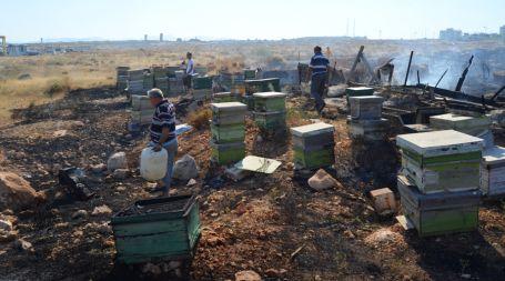 Arazide çıkan yangında arı kovanları yandı