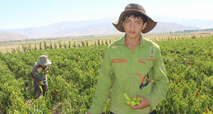 12 saat çalışan çocuk işçi: Kazandığım parayı anneme vereceğim