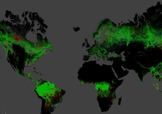 12 yılda 2.3 milyon kilometrekare orman yok oldu