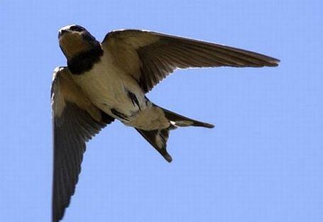 Uruguaylı kuşlar ve Türkiyeli deniz kabukları