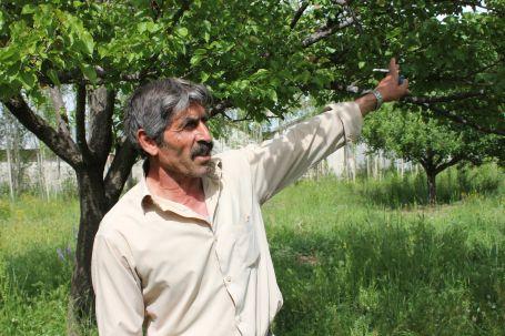 Erciş'te 250 bin ağaç kesiliyor