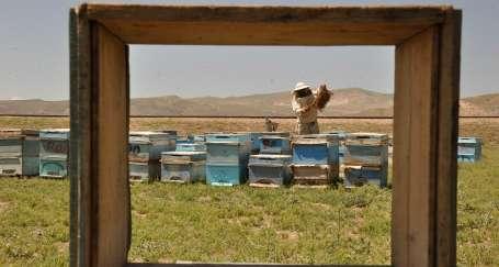 Arıcılar da en az arılar kadar emek harcıyor
