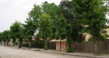 Malatya'da ağaç katliamı devam ediyor