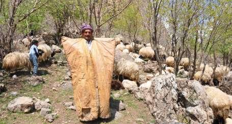 Kato Dağı'nda, ölümle burun buruna çoban olmak
