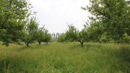 Erciş'in 250 bin ağacı Mecliste