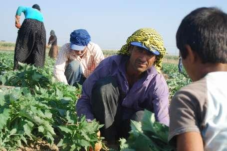 En alttakiler: Mevsimlik tarım işçileri