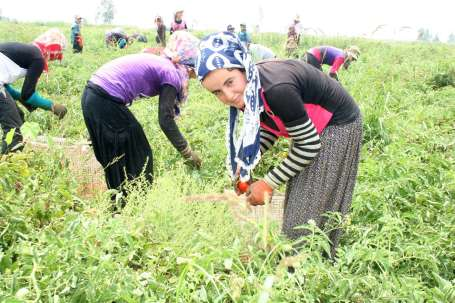 Tarım işçisi kadınlar için yaşam; yoksulluk ve şiddet