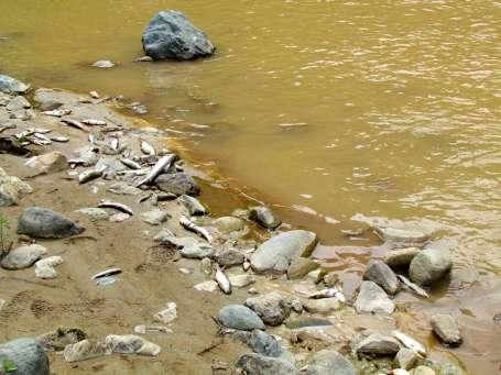 Toplu balık ölümleri paniğe neden oldu