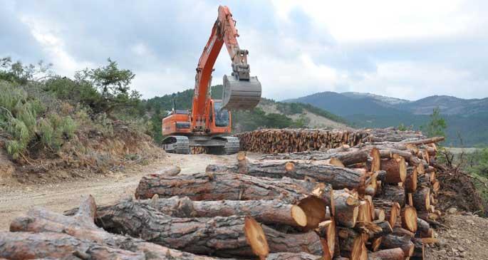 Ağaç kesimi komşu köye ihale edilmiş