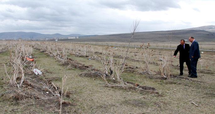 AKP'nin ormanını arayan Vali, çalı çırpı buldu!