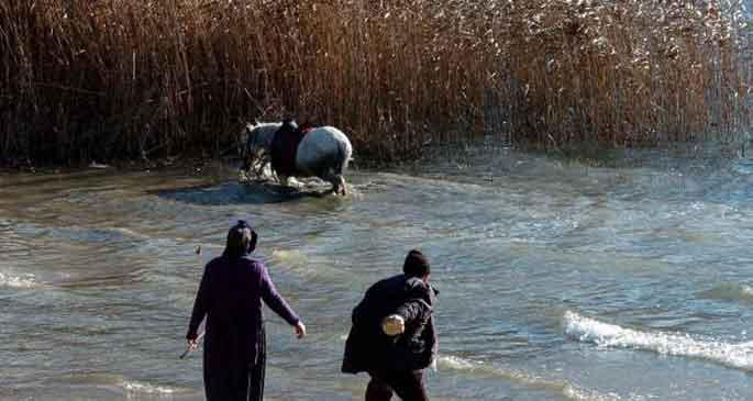 At doğaya kaçtı!