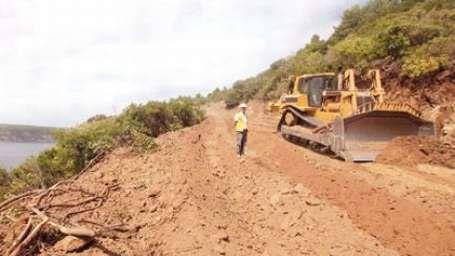 Yok edilen ormanlar ve 'özel ağaçlandırma'