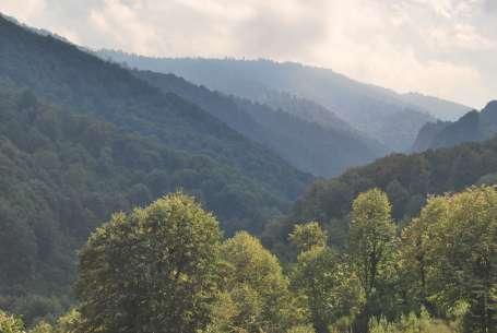 Biz bir ağaca kıyamıyoruz onlar dağı yok ediyor