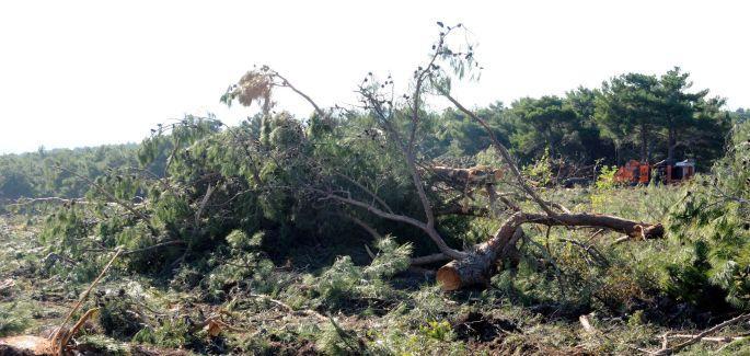 Çanakkale\'nin en güzel ormanı, odun için kesildi