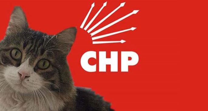 CHP\'den Şero imzalı Hayvan Hakları Genelgesi
