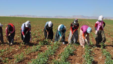 Tarım işçileri artık örgütlü olacak