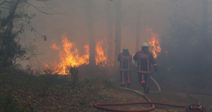 Her yıl 10 bin hektar orman yangına kurban
