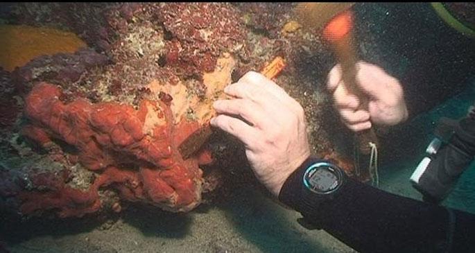 kanserle savaşan deniz mikroorganizmaları