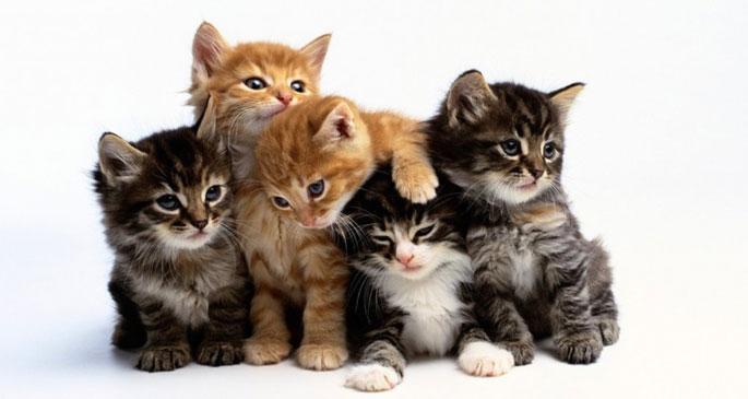 'Kediler insanları büyük bir kedi zannediyor'