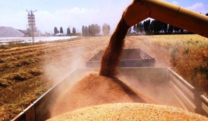 Konyalı üretici buğdaya veda ediyor!