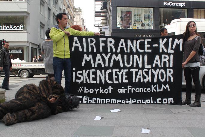 Maymunlar için yabancı havayolu şirketi işgal edildi