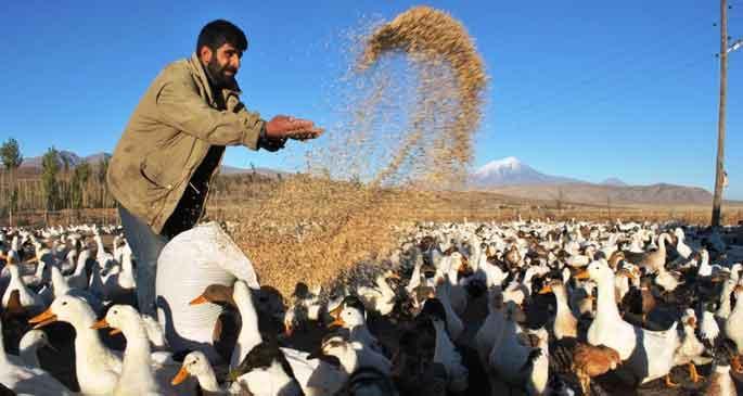 Portakallı Pekin ördeği yapmak artık zor değil