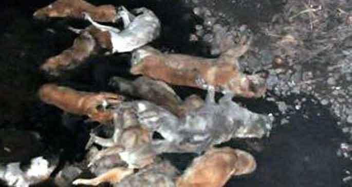 Sokak köpeklerini katledip dereye atmışlar