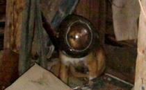 Kafasına bidon sıkışan köpeği itfaiye kurtardı