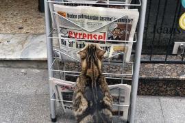 RSF Türkiye Temsilcisi Önderoğlu: BİK'in Evrensel'in ilanını kesmesi adilane olmaz