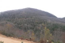 Ordu Çevre Derneği: Bal ormanı mı maden işletmesine hizmet mi?