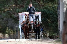 Bolu'da ruam hastalığı şüphesi taşıyan 8 at karantinaya alındı
