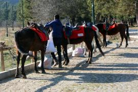 Bolu'da karantinaya alınan atların sahiplerinde ruam bulgusuna rastlanmadı