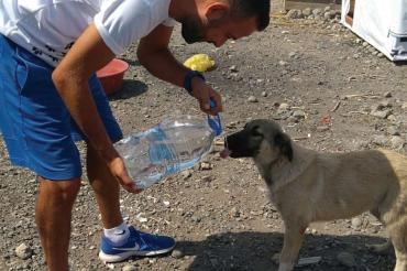 Biliyoruz ki sokak hayvanlarının hepimize ihtiyacı var