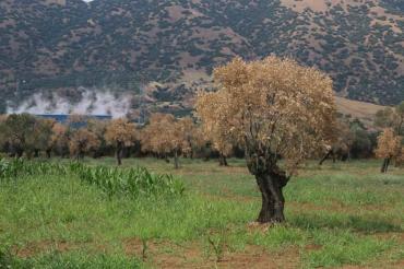 CHP'li Bülbül: Devlet JES'leri denetlemiyor, felaketin yükü vatandaşın omuzunda