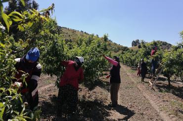 """Mevsimlik tarım işçileri Kovid-19 salgınına rağmen """"yaşamak"""" için tarlada"""
