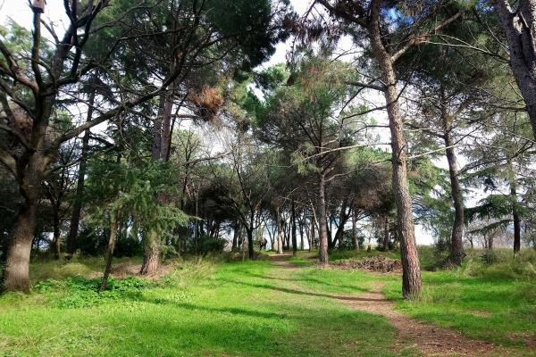 Validebağ Korusu'ndan görünüm (çok sayıda ağaç).