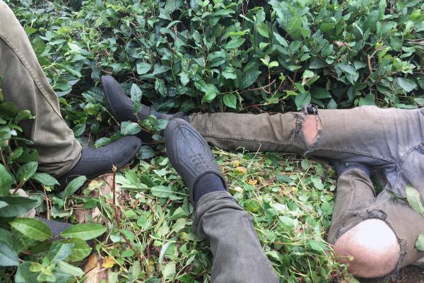Tarım işçilerinin ayakları
