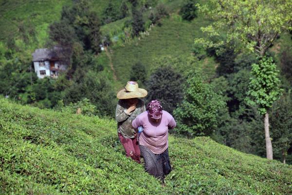 Çay bahçesinde köylü kadınlar