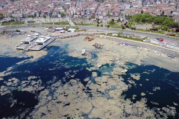 Marmara Denizi yüzeyini kaplayan deniz salyası
