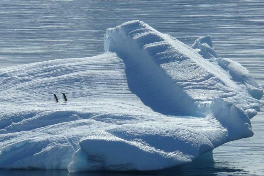 Kuzey Kutbu turizmi, çevre felaketine yol açabilir