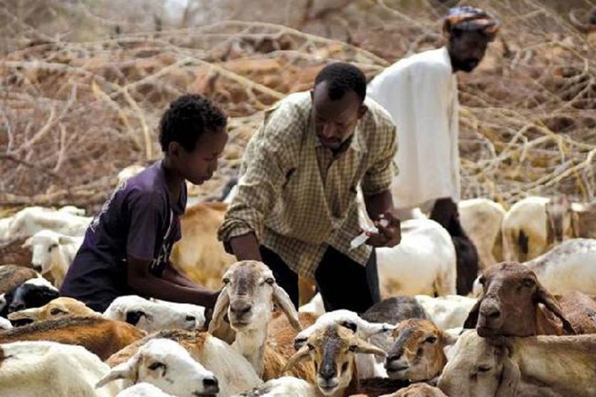 FAO: Açlıkla mücadele için bir milyar dolar gerekli