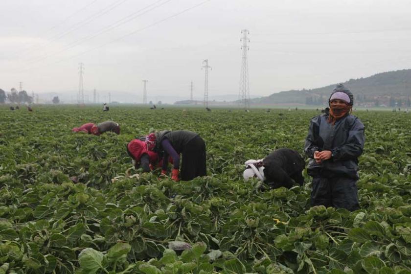 Suriyeli kadın işçiler ağır sömürü altında ve tacize uğruyor