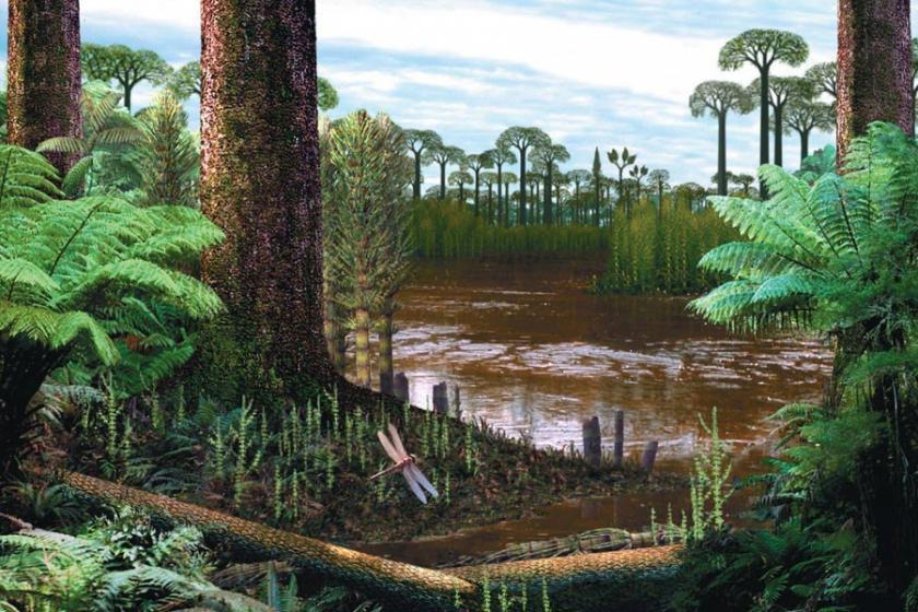 Bitkilerin evrimi ve sudan karaya geçiş -1