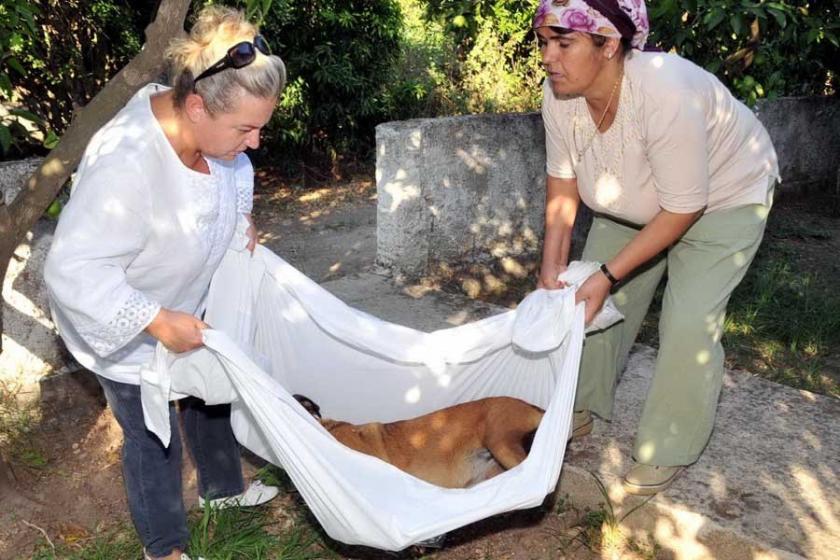 Bodrum'da 6 köpek zehirli kıyma ile öldürüldü