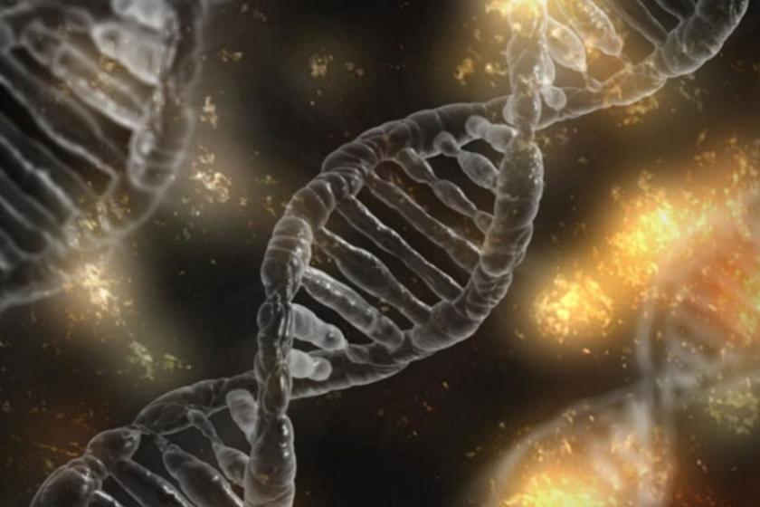 Biyo-Esinlenmiş Mühendislik Nedir? Biyomimikri Nedir?