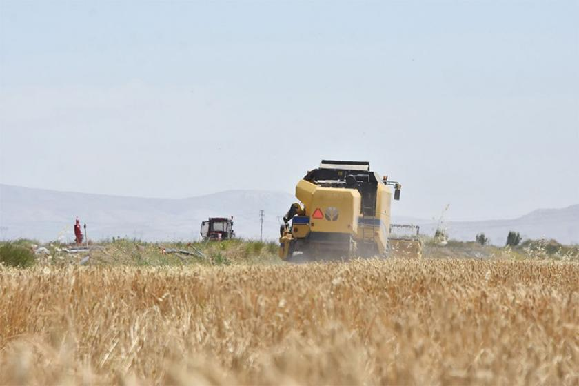 Buğday çiftçisi tüccarın insafına terk edildi