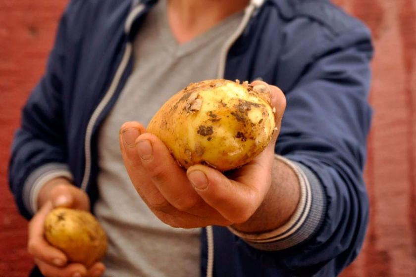 Anlamayacak bir şey yok; o patatesler bu patatesler değil