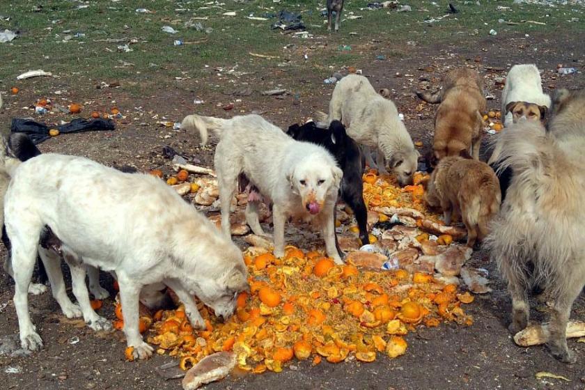 4 Ekim Hayvan Hakları Koruma Günü